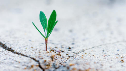 Photograph of plant growing through concrete